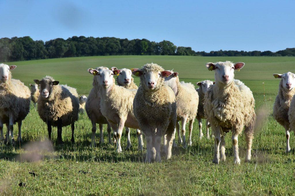 produits fermiers bio elevage agneaux